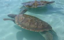 Master Tour Stingray City, Coral Garden & Turtle Farm