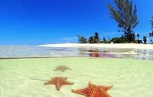 Stingray City, Coral Garden & Starfish Snorkel
