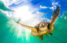 Turtle Farm Lagoon Swim