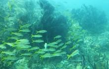 Northend Diving Trip