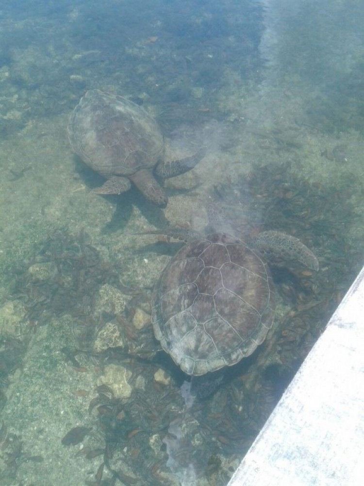 Turtle Lake Sweeting's Cay