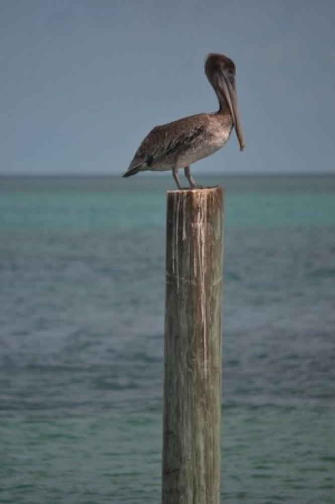 Urban Birding Freeport