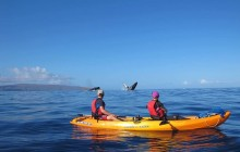 Olowalu Whale Watch, Kayak & Snorkel