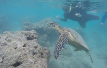 Honolulu Sail and Snorkel with Turtles