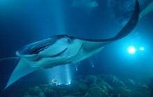 Manta Night Swim