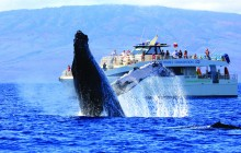 Whale Watching from Ma'alaea