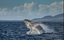 Whale Watch Sail from Lahaina