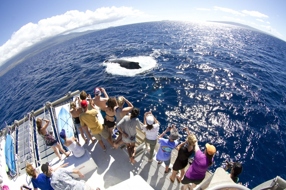 Whale Watch from Lahaina