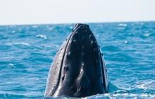 Whale Photo Safari from Ma'alaea
