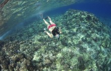 Lana'i Snorkel & Dolphin Watch from Lahaina