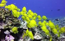 Kohala Divers