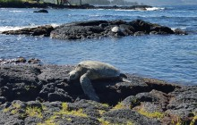 Public Group Tour: Hilo Shore Excursion