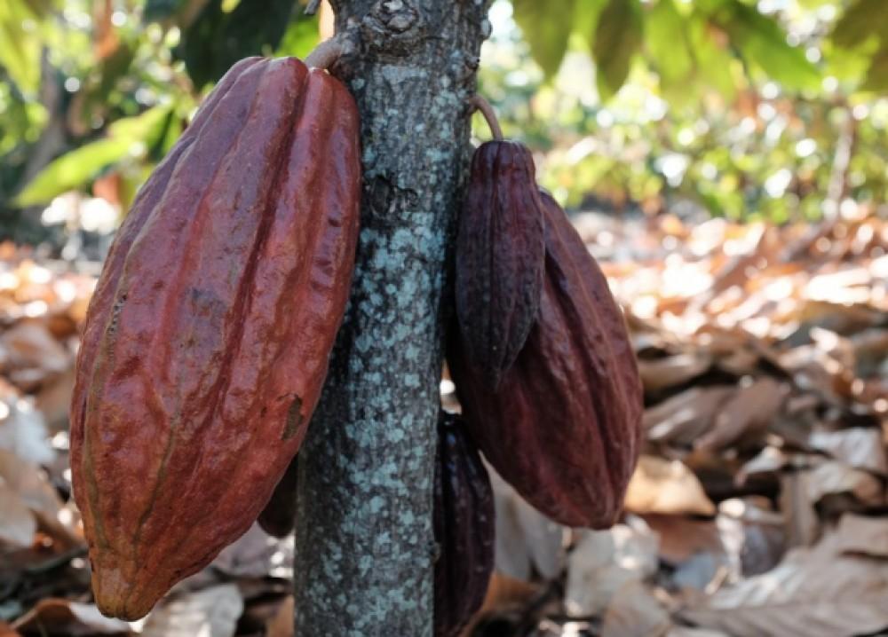 Cacao & Coffee tour