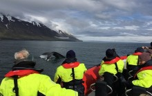 Whale Watching Express