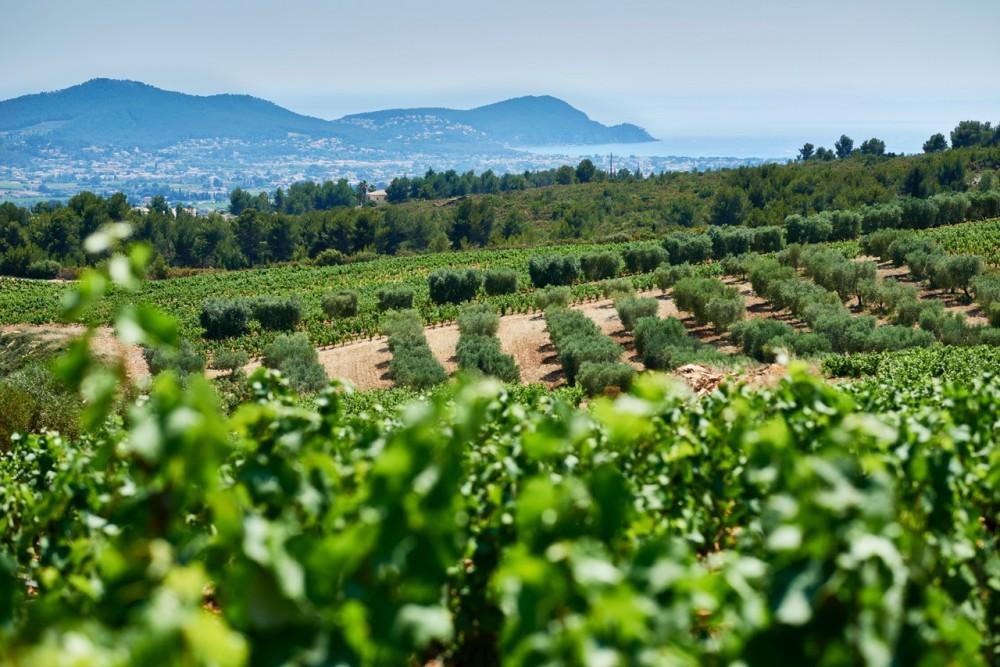 Wine Tour in Bandol & Cassis