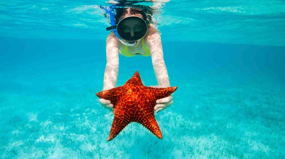 Private Charter: Stingray City, Coral Garden & Starfish Snorkel