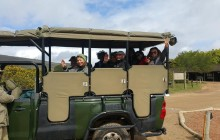 3 Day Cape to Addo Safari Tour (One Way)