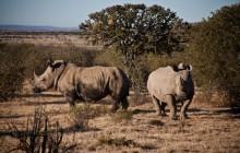 6 Day Cape to Addo Safari (Return)