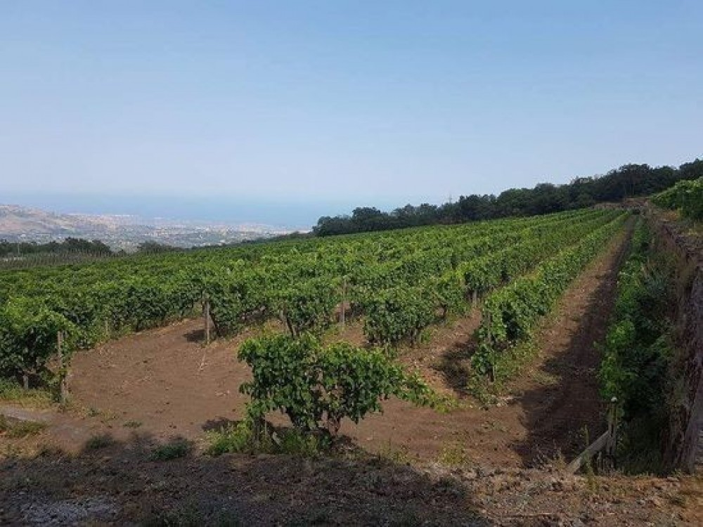 Gambio Winery and Etna Vineyard Tour