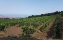 Gambio Winery and Etna Vineyard Tour
