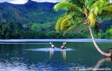 Poipu Whalewatch Sea Kayak Tour