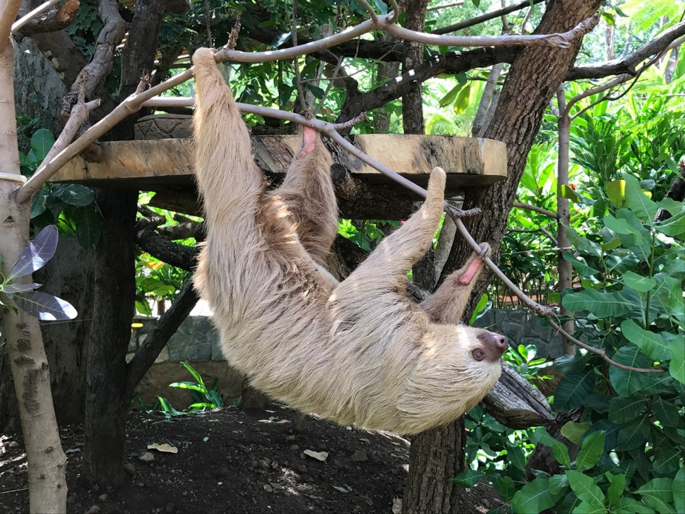 Adventure Pass - Ziplining, Animal Sanctuary, Lunch & more!
