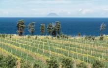 Messina Winery and Tyrrhenian Beach