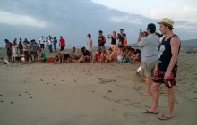 Baby Sea Turtles Release