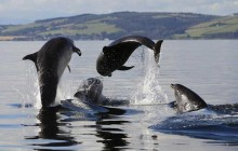Best Of The Black Isle - Small Group Tour