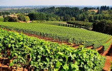 Prahova Valley Wine and Cheese Tasting from Bucharest