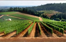 A Great Oregon Wine Tour