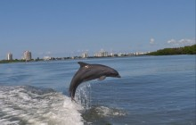 Private Marine Life Boat Safari Tour