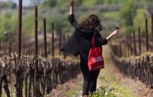 Wines & Vines of Verona