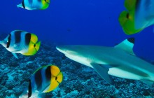 Sharks, Rays & Coral Garden Snorkeling