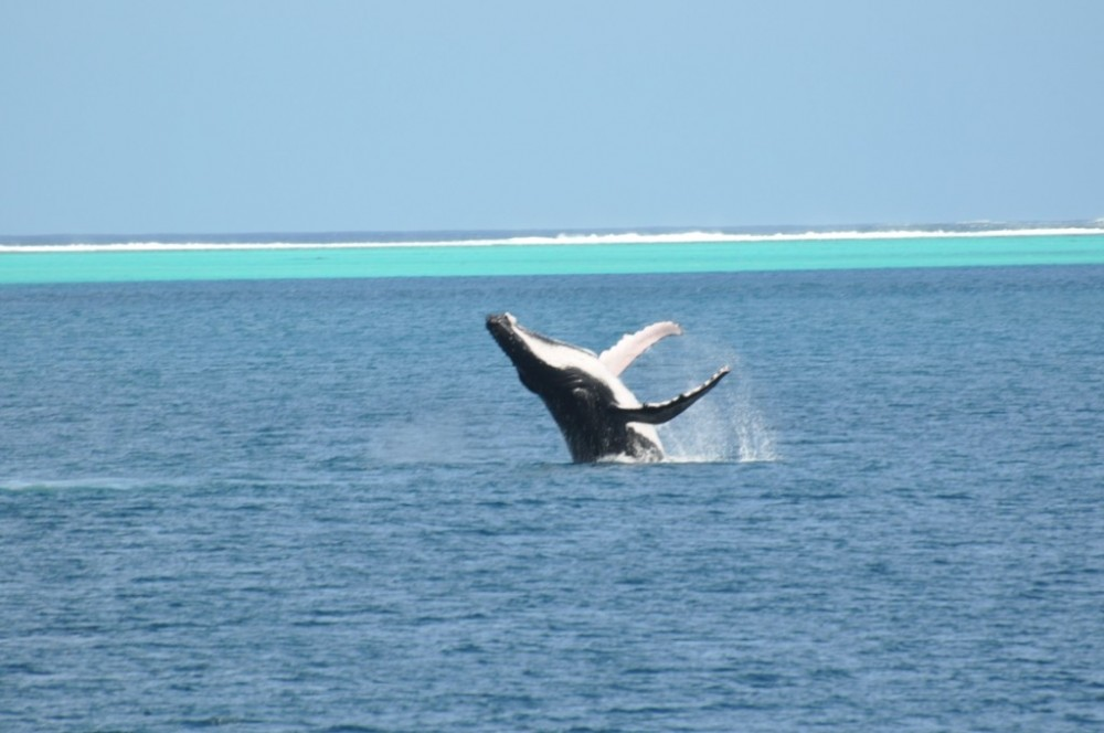Private Bora Bora Whales Watching