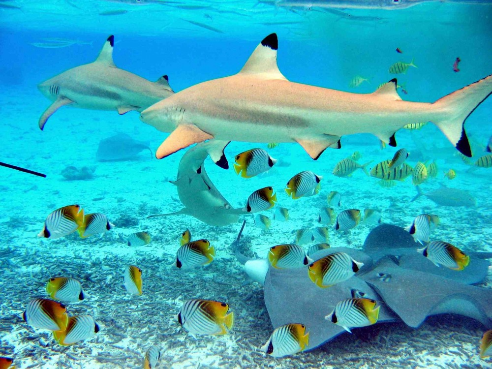 Bora bora lagoon fishing vaitape project expedition for Bora bora fish