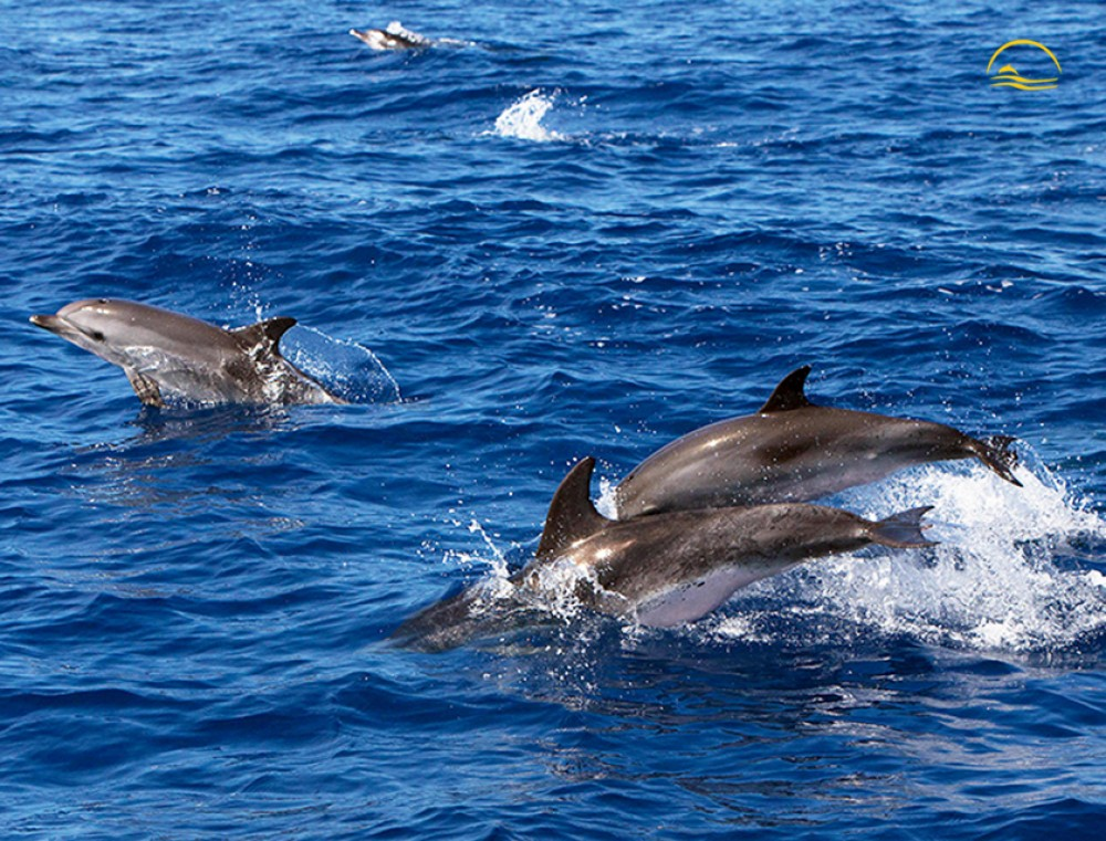Sea Experience Whale & Dolphin Watching Full Day