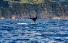 Whale and Dolphins Watching and Ribeira Quente