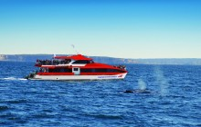 Whale Watching Cruise + Taronga Zoo