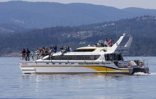 Covered Boat Whale Watching Tour - Summer - Whale Guarantee