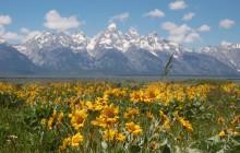Yellowstone: Wildlife & Waterfalls Tour