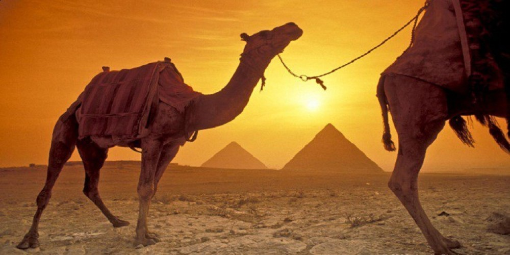 Sunset/Sunrise by Camel/Horse Private Transfer from Cairo Airport