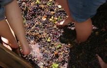 Small Group Douro Grape Harvest Tour