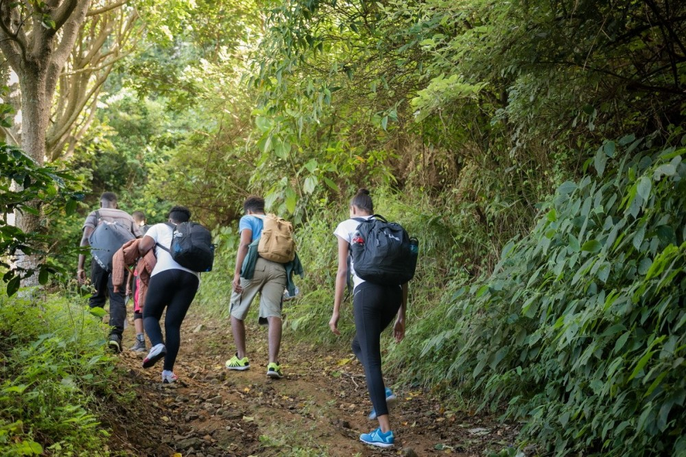 Blue Mountain Hike and Coffee Tour from Ocho Rios