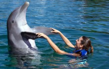 Playa Mujeres Delphinus: Dolphin Ride