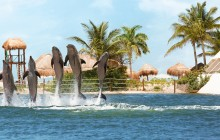 Punta Cancun Delphinus: Couples Dreams
