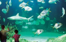 Hop On Hop Off 2 Day Pass and Sea Life Aquarium