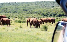 5 Day Garden Route and Addo Adventure Tour