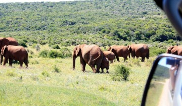 A picture of 5 Day Garden Route and Addo Adventure Tour