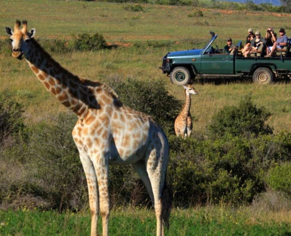 3 Day Garden Route and Safari Tour - Cape Town | Project Expedition